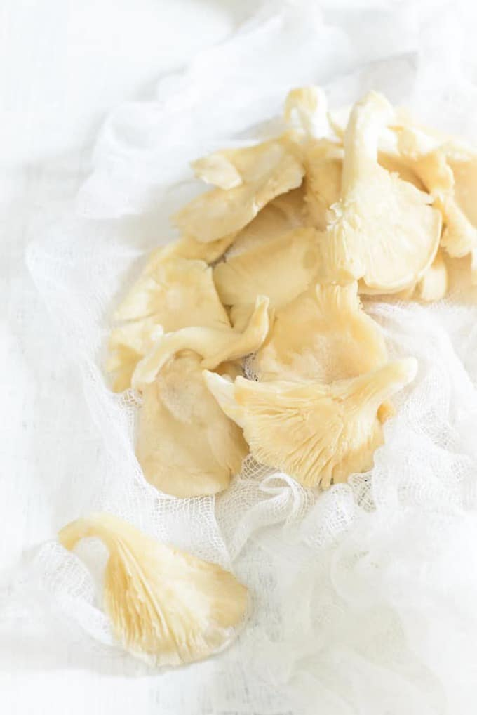 Oyster Mushroom Know your ingredient