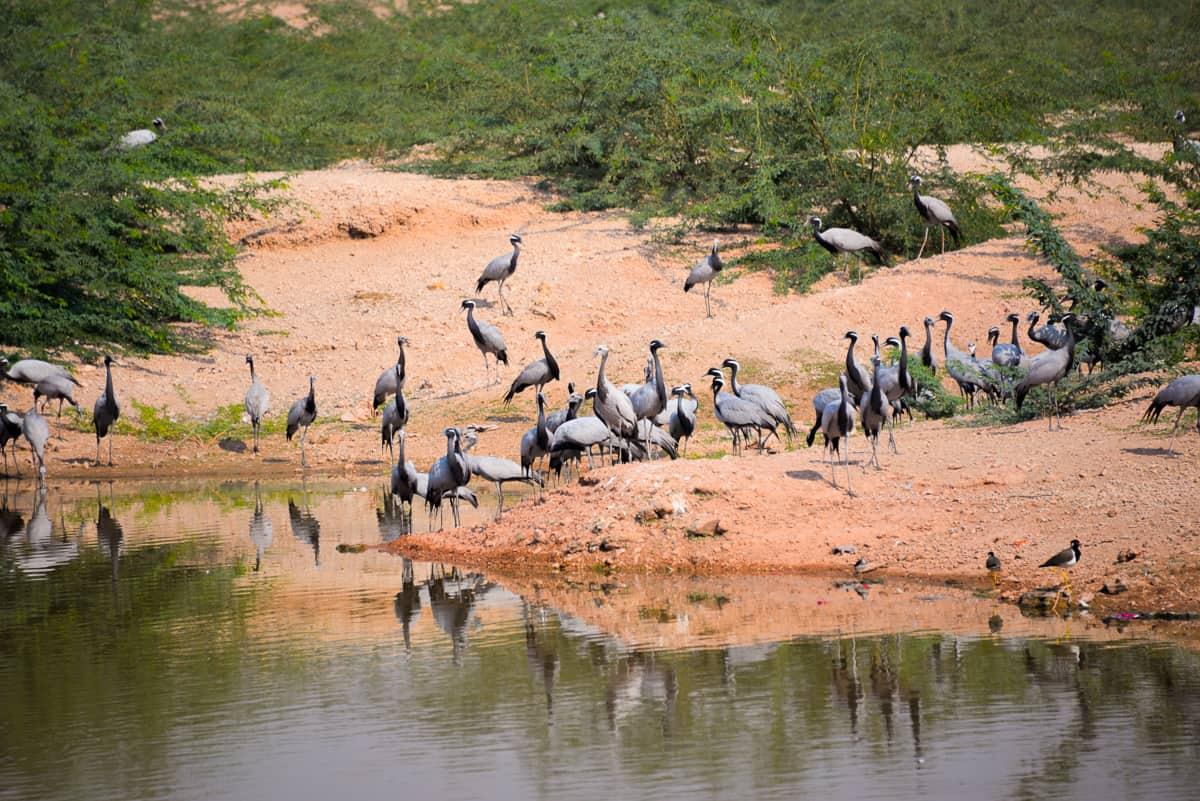 Kheechan Bird Sanctuary