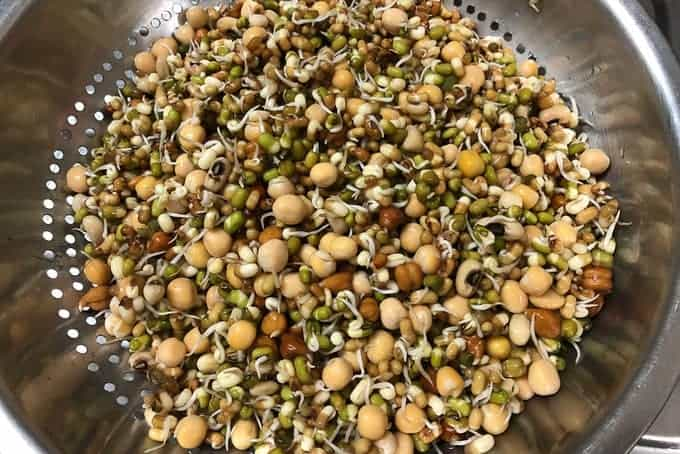 Sprouted legumes.