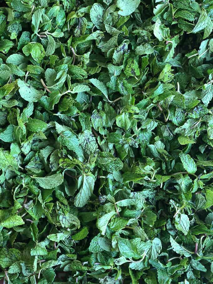 Fresh mint leaves drying on a towel.
