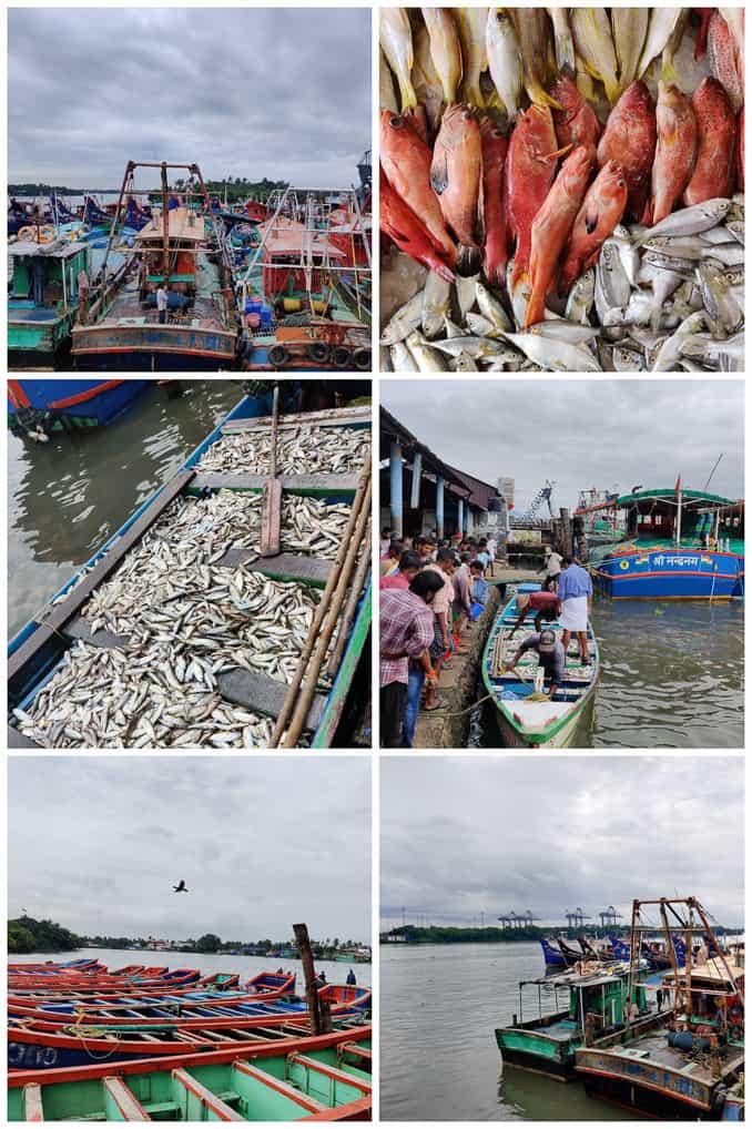 Fish market experience at Grand Hyatt Kochi