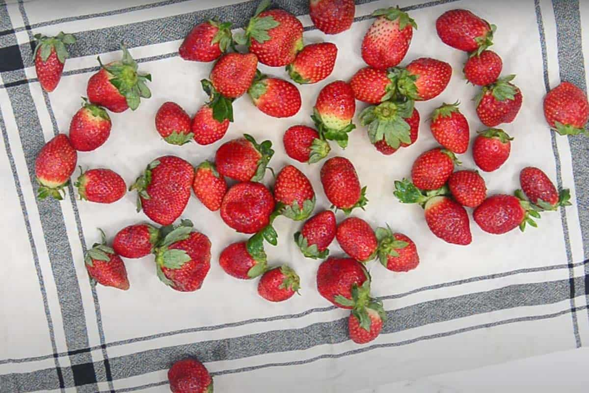 Strawberries drying on a cloth.